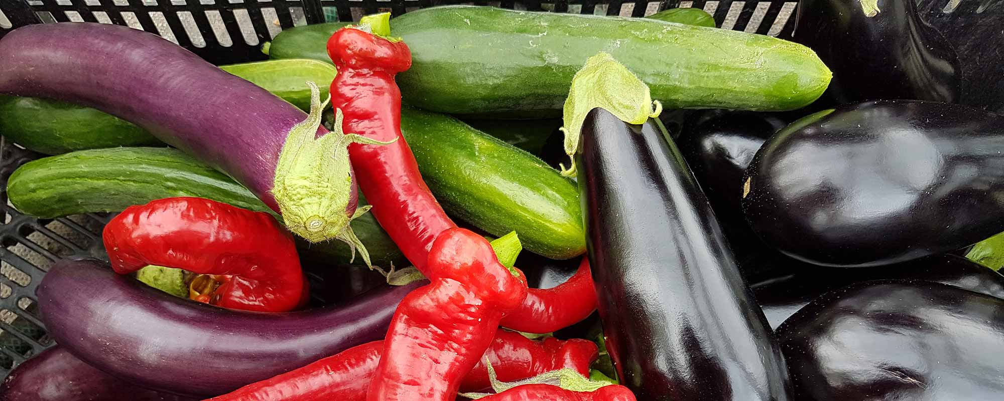 lux-organics-peppers-eggplants-cucumbers
